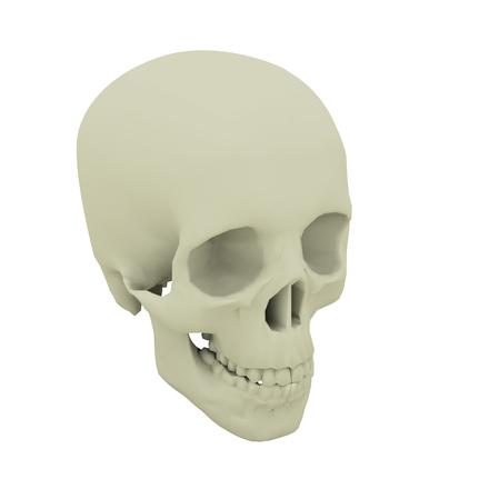 skull 3d 1