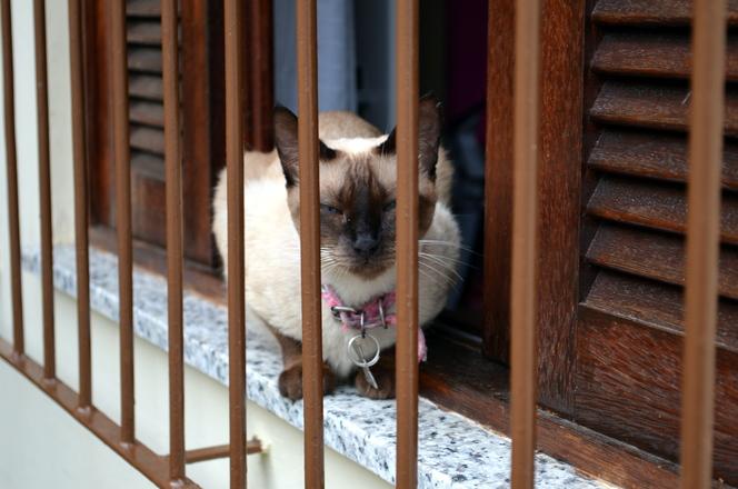 Cat in the bars