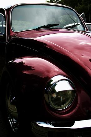 bourgoise beetle