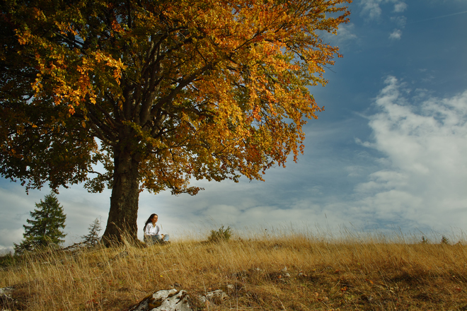Free Girl Under Tree Stock Photo Freeimages Com