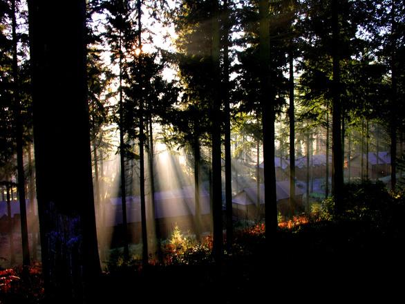 Sunglight through trees 2