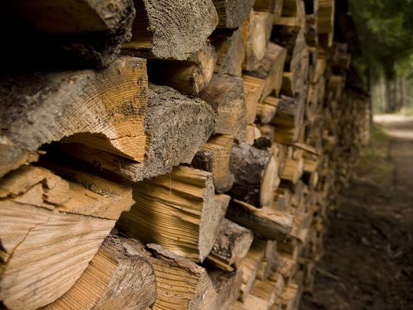 Pile Of Wood Photos 1355455