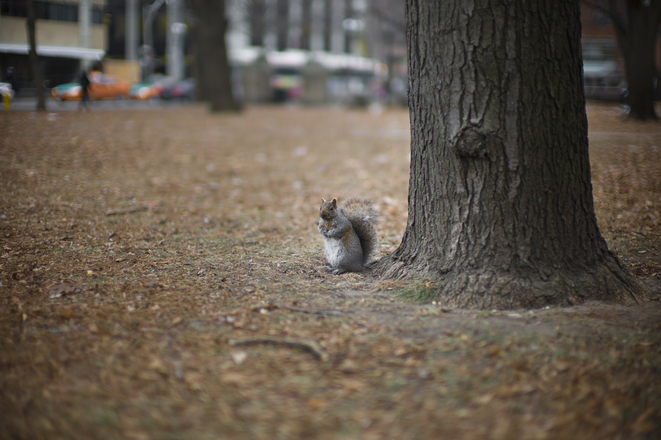 Toronto's squirrel