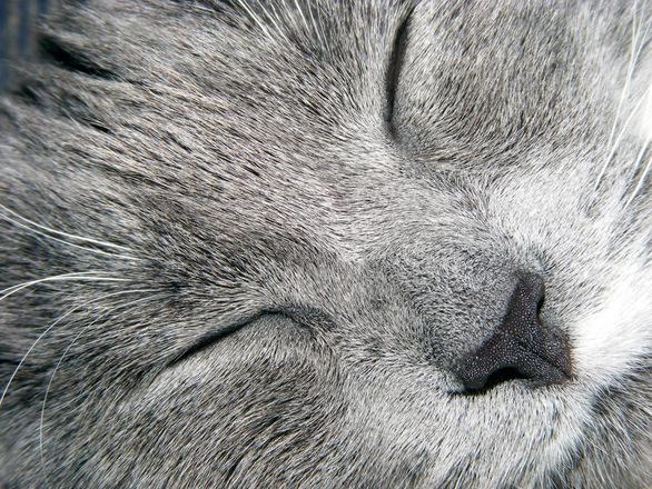Macro of a Cat