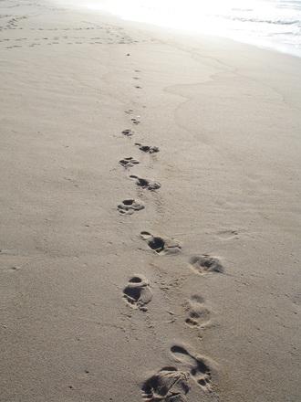 God's Footsteps