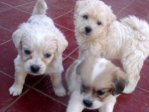 Little dog 2