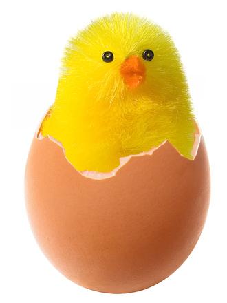 Chicken in broken egg