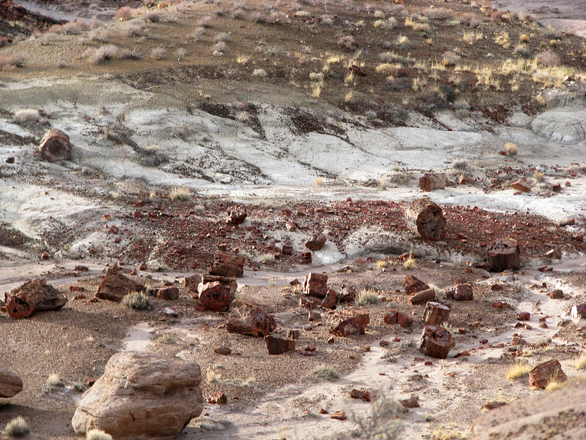 Petrified Forest National Park 3