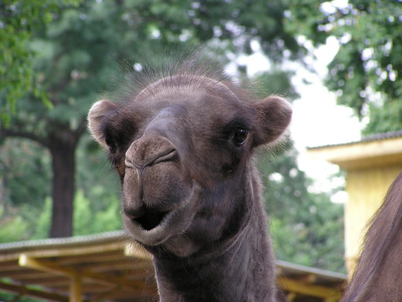 欧美zooskool系列_free zoo skool-