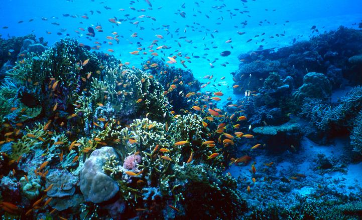 Big blue - diving 2