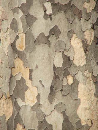 tree in milan
