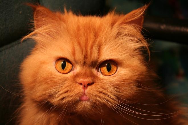 Binnaz The Cat 9