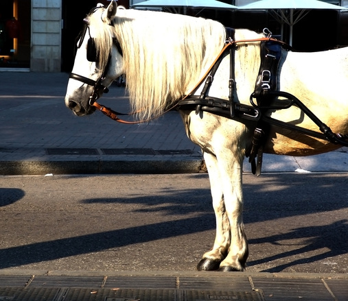 Hevonen harrastuksena
