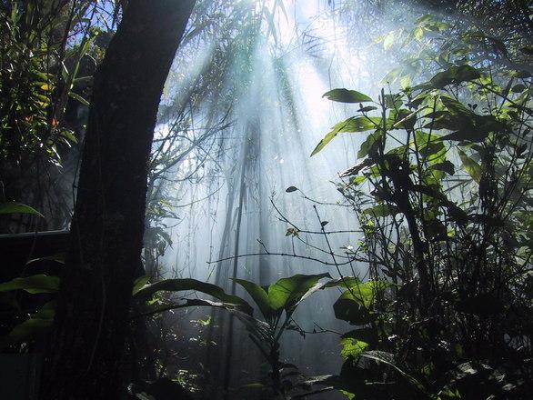 Jungle Dreaming