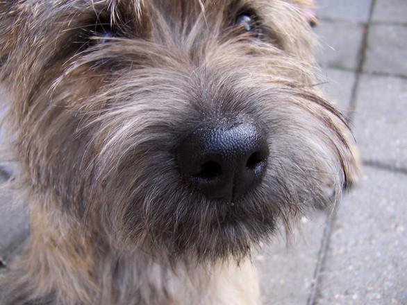 Doggy 2