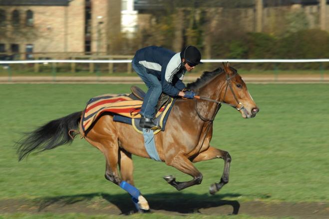 Racehorse 2