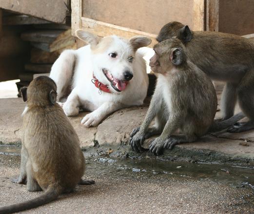 Dog and monkeys