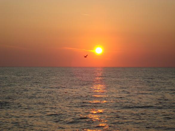 Sunrise with a bird