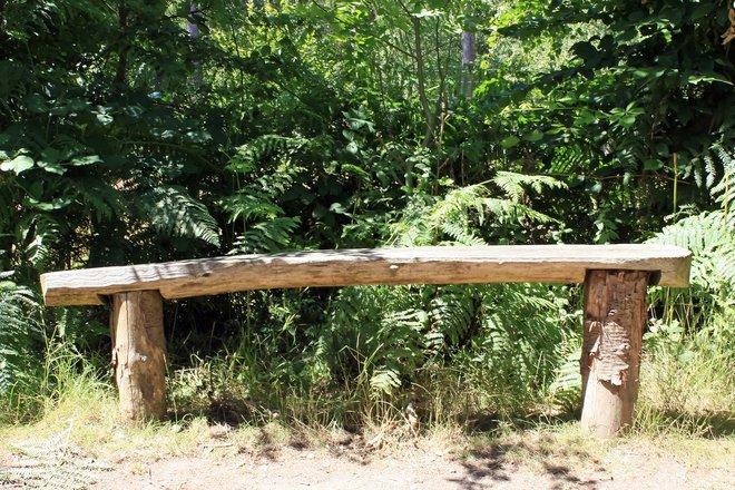 Tree Stump Bench Photograph 1631891