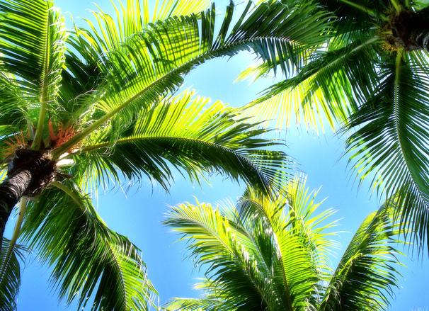 Key Largo Palms And Sky