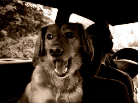 Matkustus koiran kanssa
