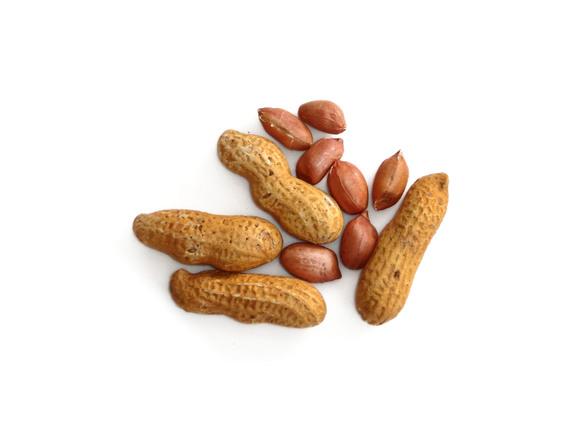 ground nut