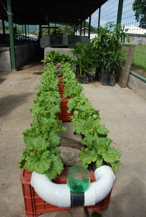 Hydroponic horticulture 2