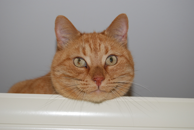 Ginger Cats Signs
