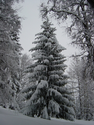 If you are looking for where to cut your own Christmas tree in Southern California, there are at least 20 options to choose from.