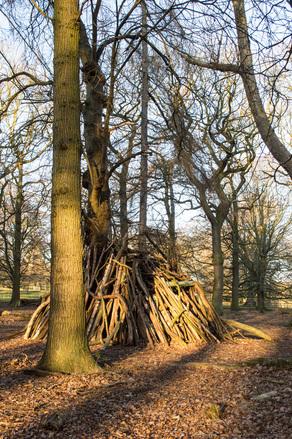 Log Den in Woods