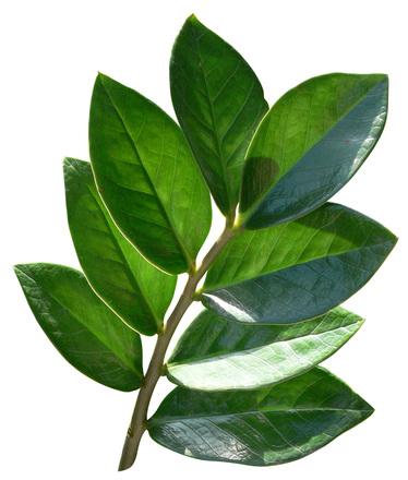 Green Leaf Science Diet Food