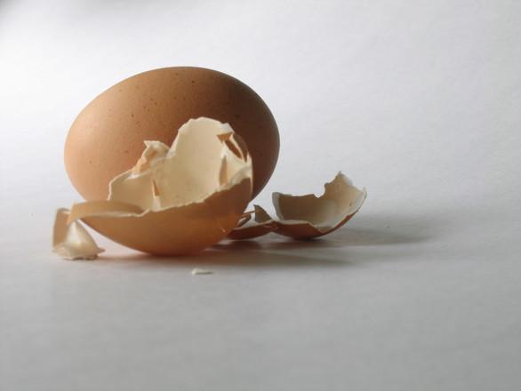 Egg Shell 5
