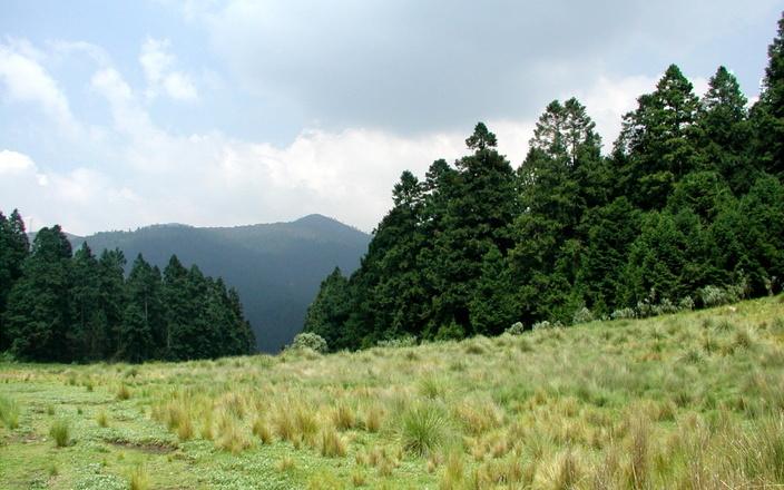 field-pines-mountain