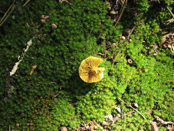 Mushroom 2