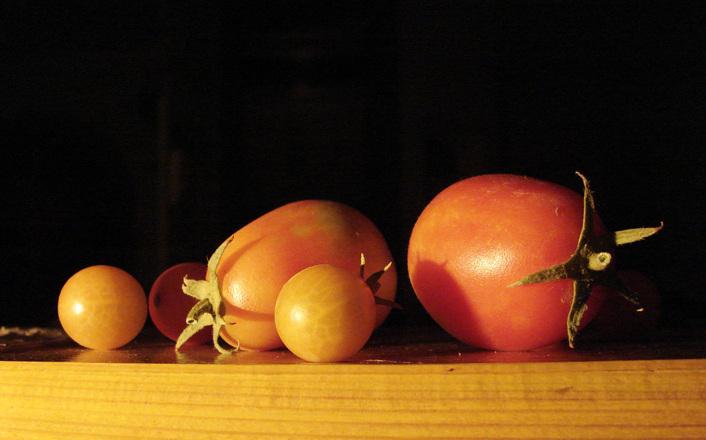 New Horizon Organic Tomato Food