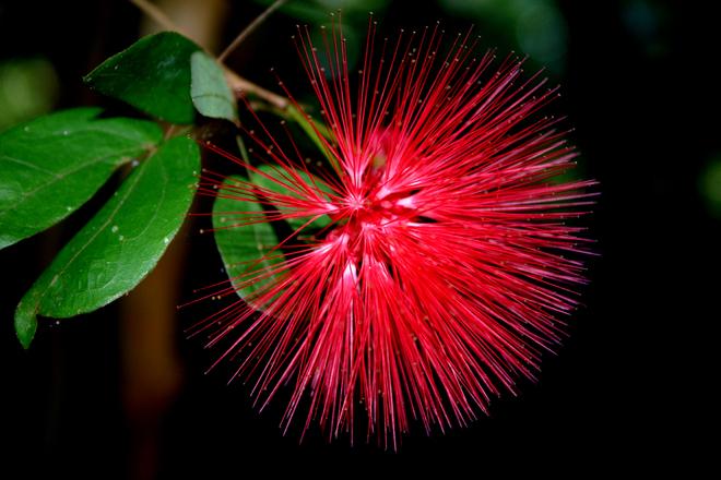Tropical Flower 1