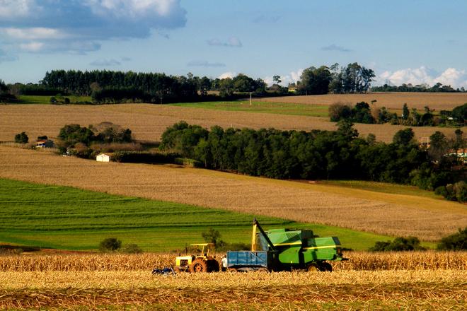 grains production II