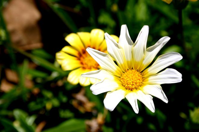 Tropical Flower 6