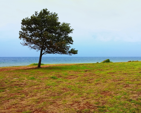 Pinetree on the beach 2