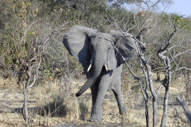 http://images.freeimages.com/images/previews/eac/elephant-1366299.jpg