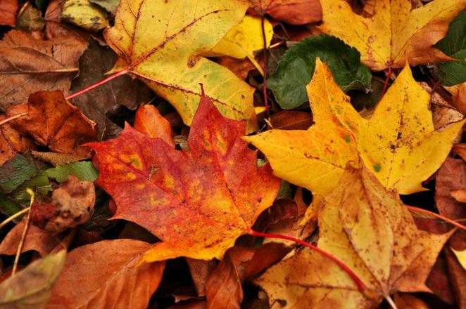 Autumn in Fredriksdal