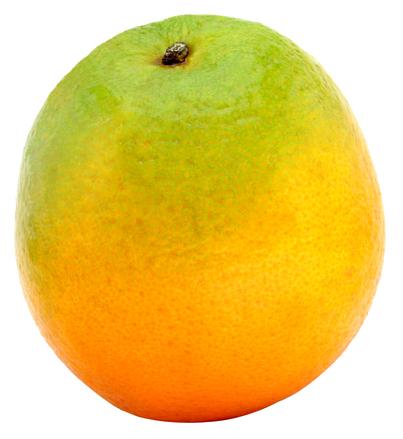 Just an Orange/ Uma Laranja