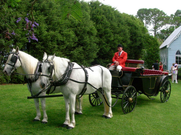 royal horses at wedding