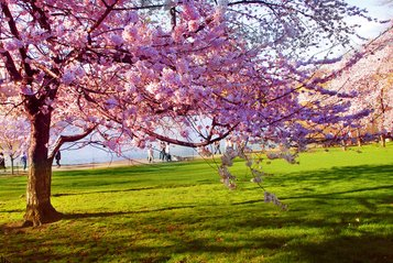 free spring images pictures and royalty free stock photos