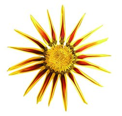 Free yellow flower white background images pictures and royalty a sunny flower mightylinksfo