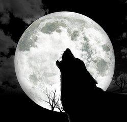 [Image: howl-1355367.jpg]