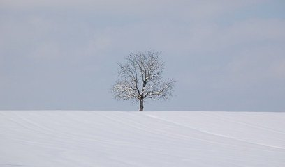Silence,tree,snow,white