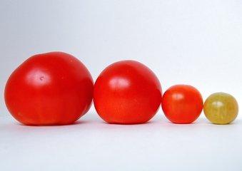 tomatoe family