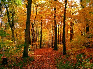 Outdoor backgrounds Full Hd Autumn Colors Freeimagescom Free Outdoor Background Images Pictures And Royaltyfree Stock