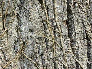君子兰不得沾污水。 因为君子兰感染病原菌,使君子兰疏散土壤,土壤硬的话君子兰就不能从土壤中获取营养,叶子变黄,势头变形。